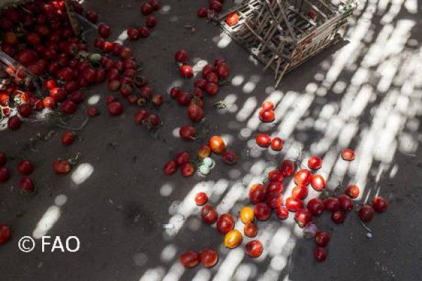 FAO webinar